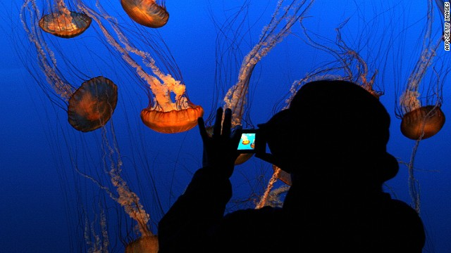 140804083842-monterey-bay-aquarium-horizontal-gallery