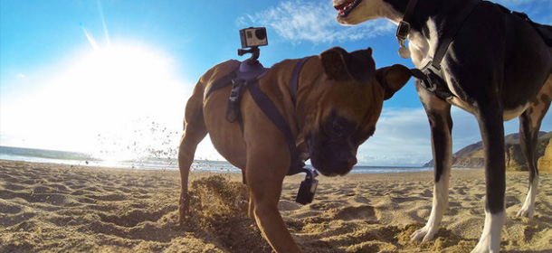 1408988993-gopro-finally-launches-camera-harness-mans-best-friend