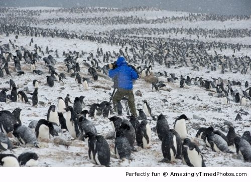 Outside-in-the-cold-with-penguins-resizecrop--