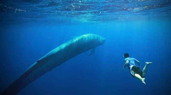 4 Blue Whale