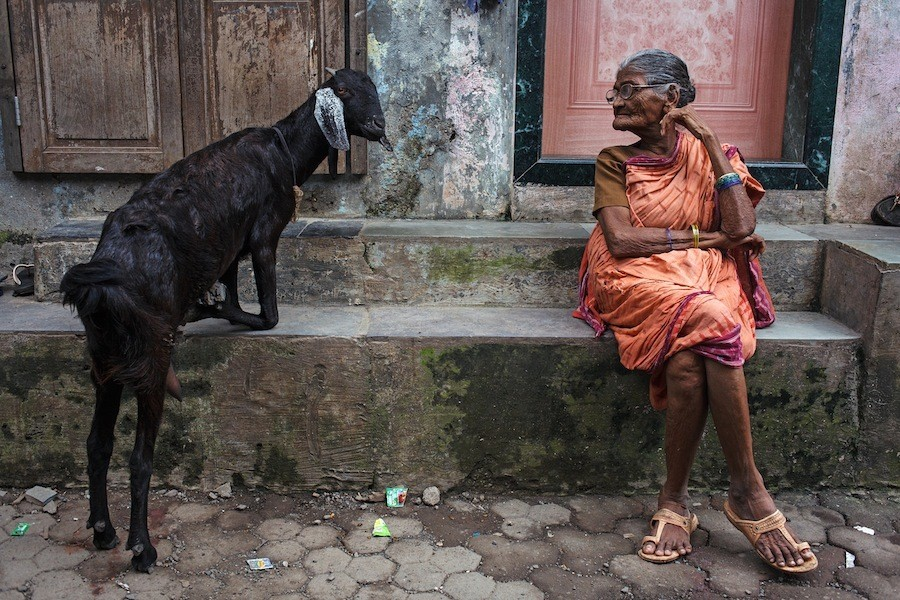 A woman and goat in the lane of Ashok Nagar in Mumbai, India.