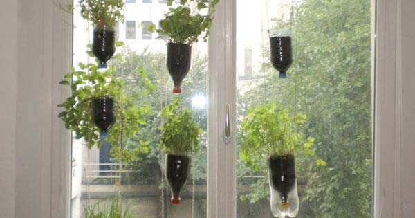 Bottle-Top Vertical Garden