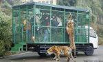 China's Most Ferocious Zoo