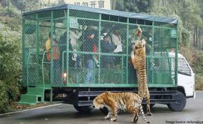 China's Most Ferocious Zoo