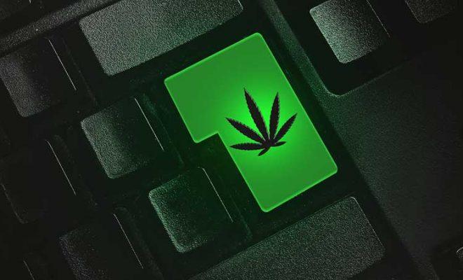 5 Best Online Resources for Cannabis Information