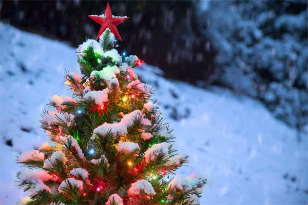 Snow  on a Christmas tree